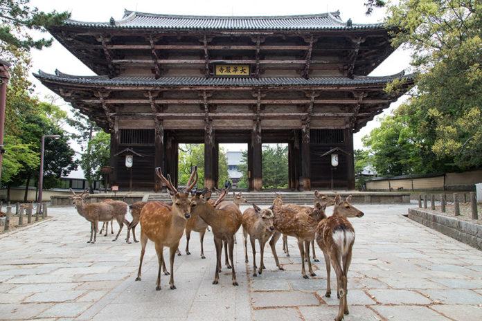 """<i>""""To be a deer in Nara""""</i> – 'Nara'"""