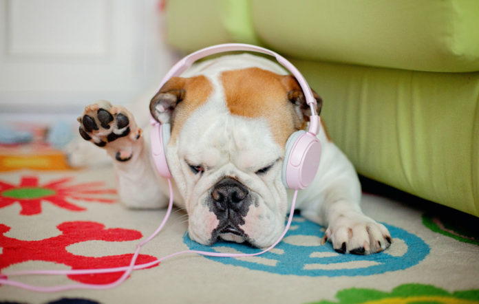Spotify have introduced a new pets feature