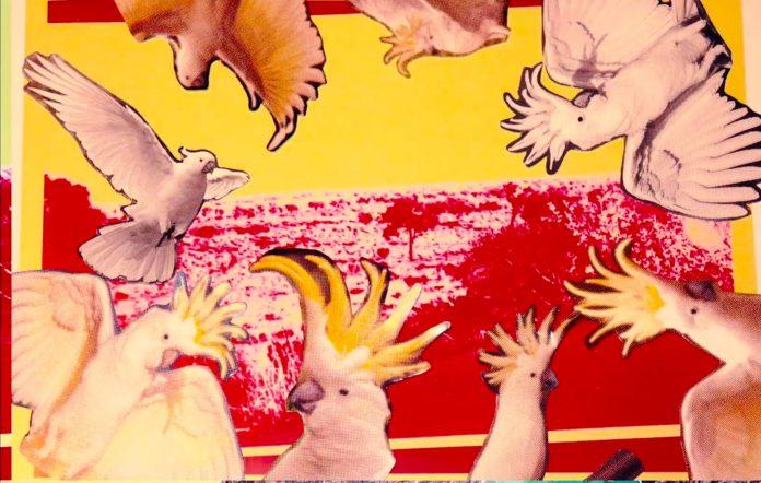 Still from King Stingray's 'Hey Wanhaka' video